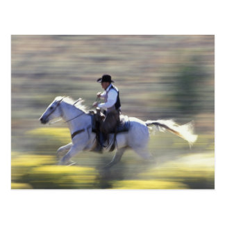 NA, USA, Oregon, Seneca, Ponderosa Ranch, Cowboy Postcard