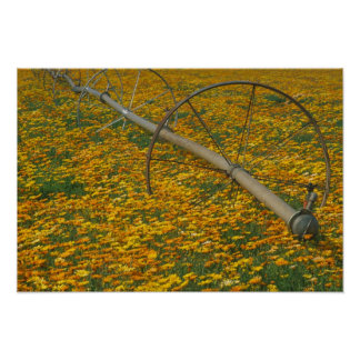 NA, USA, Oregon. Watering system in field of Poster
