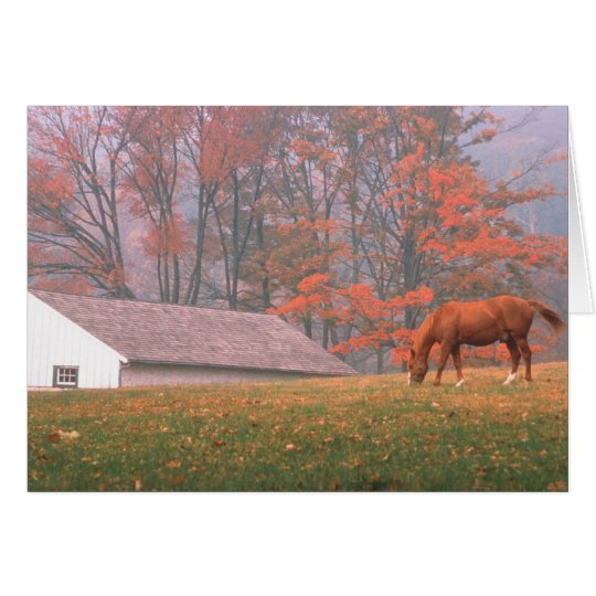 NA, USA, PA, Valley Forge. Horse grazing in a