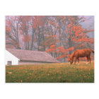 NA, USA, PA, Valley Forge. Horse grazing in a Postcard
