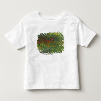 NA, USA, Texas, east of Devine, Coreopis and Toddler T-Shirt