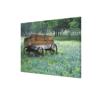 NA, USA, Texas, east of Devine, Old wagon in Canvas Print