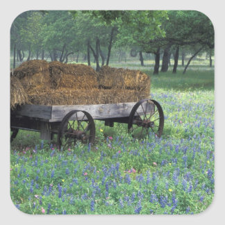 NA, USA, Texas, east of Devine, Old wagon in Square Sticker