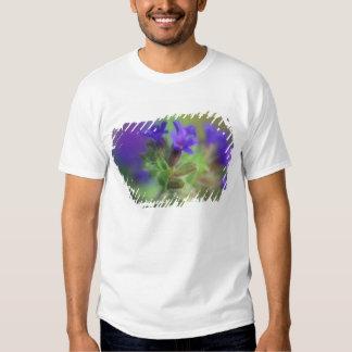 NA, USA, Washington, Eastern Washington. Wild Tshirts