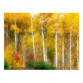 NA, USA, Washington, Fall Aspen Trees along Postcard