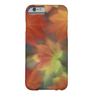 NA, USA, Washington, Issaquah, Vine maple Barely There iPhone 6 Case