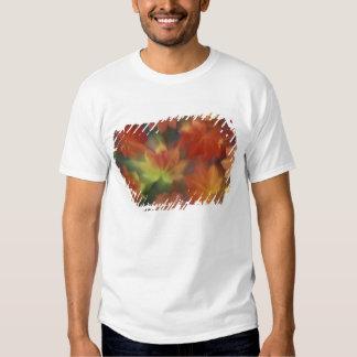 NA, USA, Washington, Issaquah, Vine maple Tee Shirts