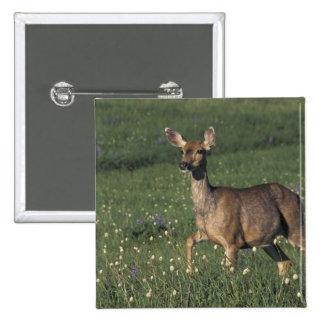 NA, USA, Washington, Olympic NP, Mule deer doe 2 15 Cm Square Badge