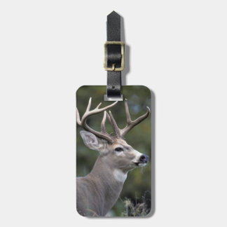 NA, USA, Washington State, White-tailed deer, Luggage Tag