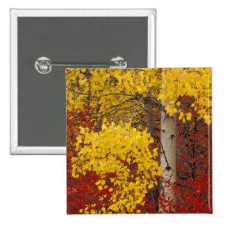 NA, USA, Washington, Wenatchee National Forest. 15 Cm Square Badge