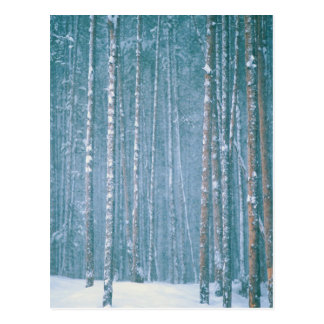 NA, USA, WY. Snowy winter scene among Postcard