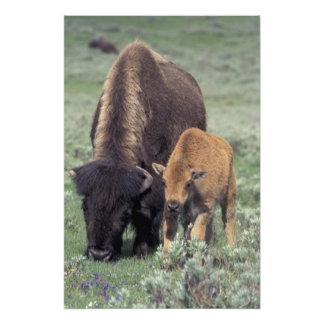 NA, USA, Wyoming, Yellowstone National Park. Art Photo