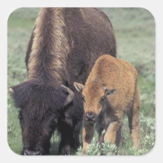 NA, USA, Wyoming, Yellowstone National Park. Square Sticker