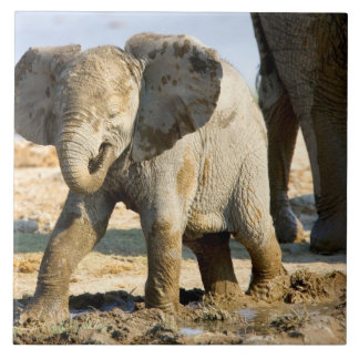 Namibia, Africa: Baby African Elephant Large Square Tile