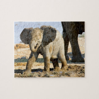 Namibia, Africa: Baby African Elephant Puzzles