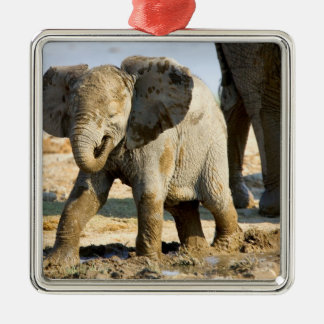 Namibia, Africa: Baby African Elephant Silver-Colored Square Decoration