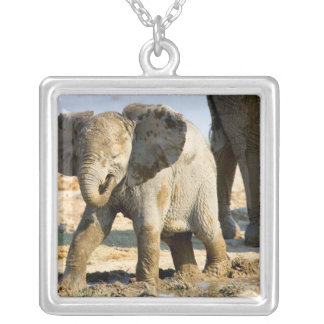 Namibia, Africa: Baby African Elephant Square Pendant Necklace