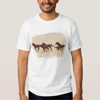 Namibia, Aus. Group of running wild horses on Shirts