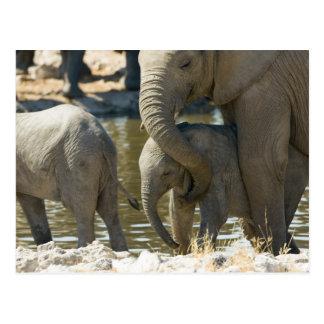 Namibia, Ongava Camp and Etosha National Park, Postcard