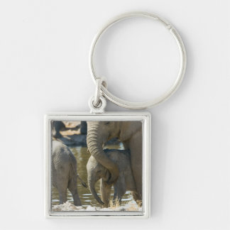 Namibia, Ongava Camp and Etosha National Park, Silver-Colored Square Key Ring