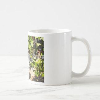Napa Grapes Coffee Mug