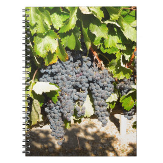 Napa Grapes Notebooks