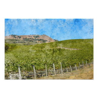 Napa Valley California Vineyard Photo Print