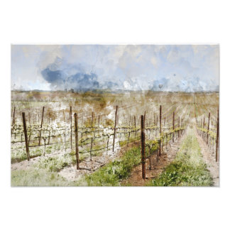 Napa Valley Vineyard Photo Print