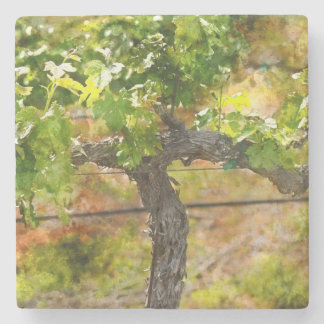 Napa Valley Vineyard Stone Coaster