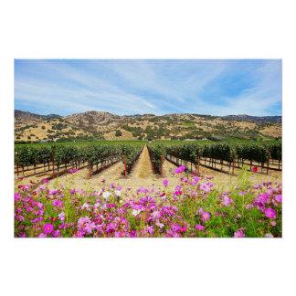 Napa Valley Vineyard with Cosmos