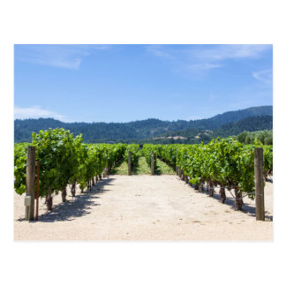 Napa Valley Vineyards Postcard