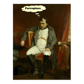 Napoleon Thinks About Porcupines Postcard