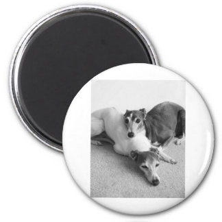 Napping Italian Greyhounds Magnet