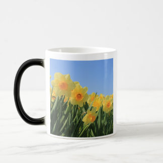 Narcissus by Thespringgarden Magic Mug