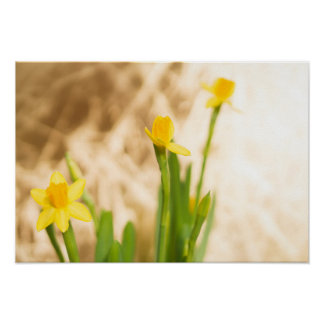 Narcissus on gold poster