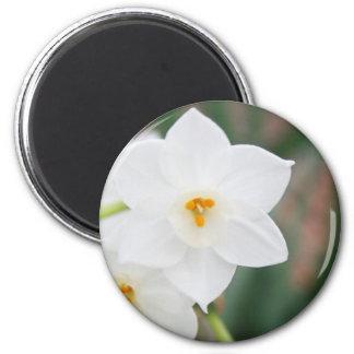 Narcissus Papyraceus 6 Cm Round Magnet