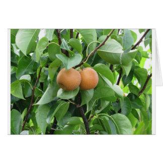 Nashi pears hanging on tree card