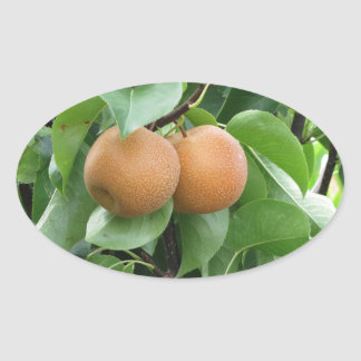 Nashi pears hanging on tree oval sticker