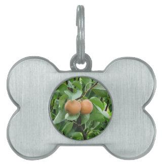 Nashi pears hanging on tree pet name tag