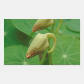 Nasturtium Buds Rectangular Sticker