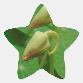 Nasturtium Buds Star Sticker