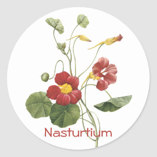 Nasturtium Classic Round Sticker