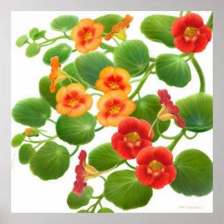 Nasturtium Flower Vines Poster