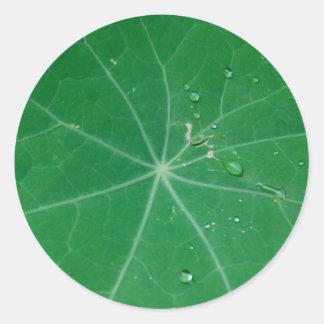nasturtium leaf round sticker