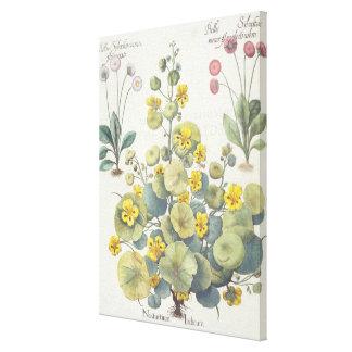 Nasturtiums and Daisies: 1.Nasturtium Indicum; 2.B Gallery Wrap Canvas