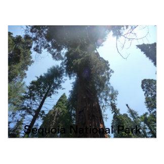 National Park Series Postcard