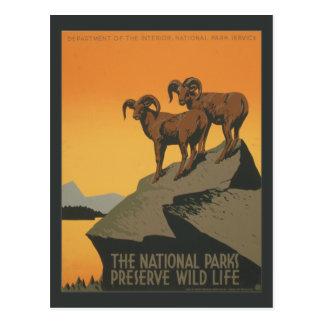 National Parks Preserve Vintage Ad. Postcard