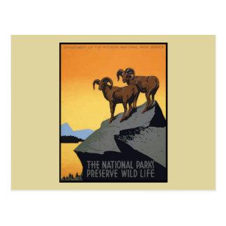 National Parks Preserve Wild Life Postcard