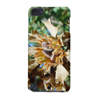 Native seed pods on dead bush iPod touch (5th generation) cover