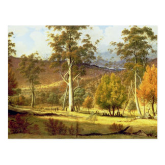 Natives in the Eucalypt Forest on Mills Plains, Pa Postcard